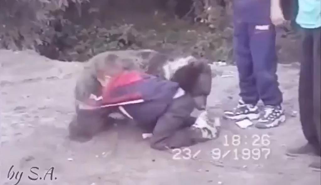 ヌルマゴメドフ 熊 乱闘